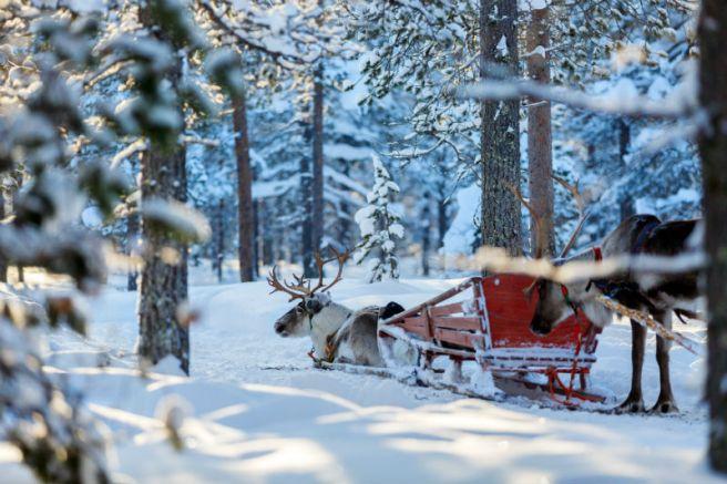 Lapland-Reindeer-800x533